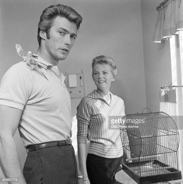 American actor Clint Eastwood and his wife, Maggie Johnson, play with two pet budgerigars in their home, October 1, 1959.