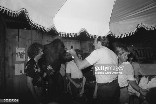 American actor Clint Eastwood toasts his orangutan costar at the Palomino Club in North Hollywood California during a party for the film 'Any Which...