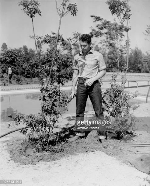 American actor Fred MacMurray waters a shrub in his garden 1938