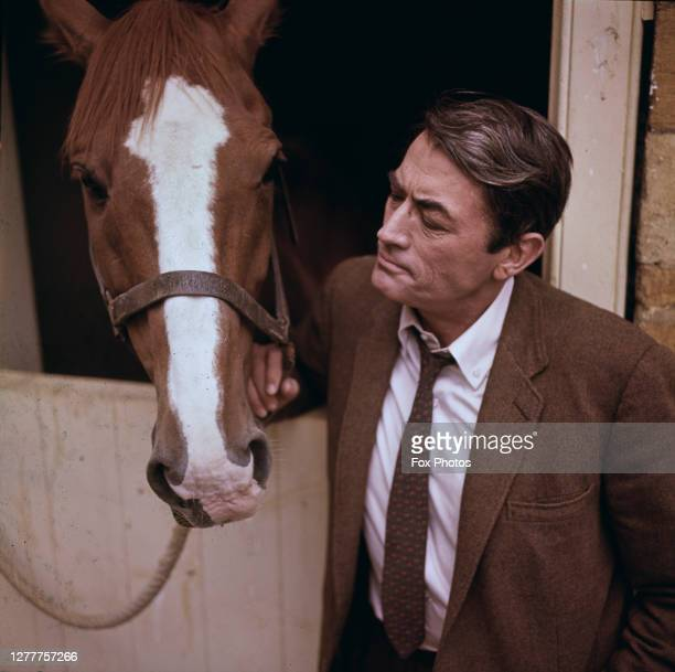 American actor Gregory Peck with a horse during the filming of Stanley Donen's 'Arabesque' in London, England, 1966.