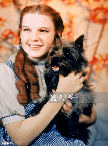 American actor Judy Garland as Dorothy Gale holding Toto the dog for the film 'The Wizard Of Oz' directed by Victor Fleming