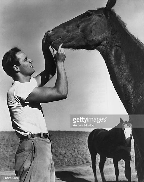 American actor Marlon Brando with a horse during the filming of 'The Men' in 1950