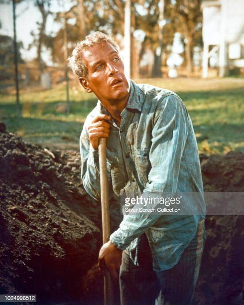 American actor Paul Newman as Luke forced to dig a gravesized hole in the film 'Cool Hand Luke' 1967