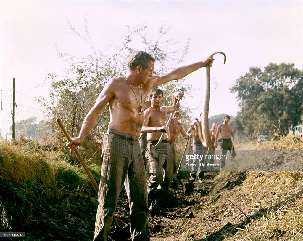 American Actor Paul Newman On The Set Of Cool Hand Luke Directed By