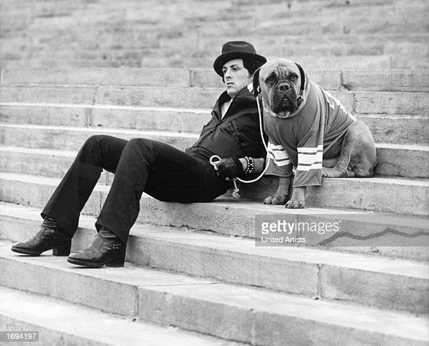American actor Sylvester Stallone sits on a staircase while holding the leash of a dog wearing a football jersey in a still from the film 'Rocky'...