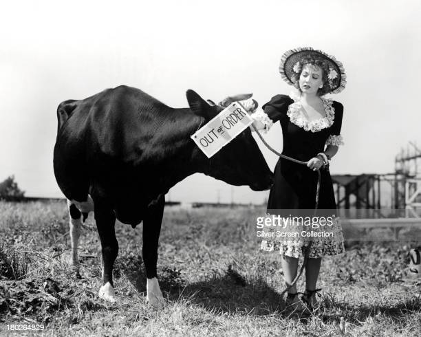 American actress Ann Sothern reading an 'Out of Order' sign attached to a cow circa 1940
