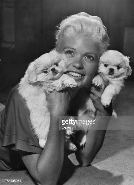 American actress Jayne Mansfield holding two white Pekingese puppies at the Dorchester Hotel, London, UK, 27th September 1957.