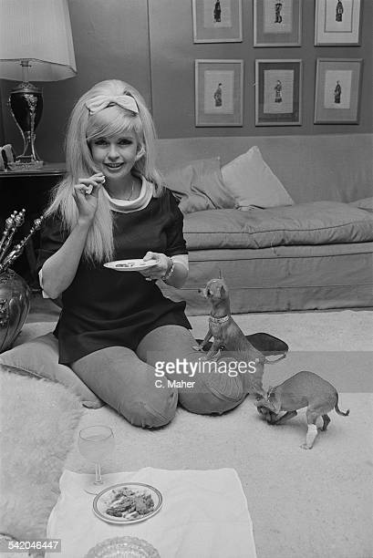 American actress Jayne Mansfield with her chihuahua's in her Mayfair hotel room, London, 10th April 1967.