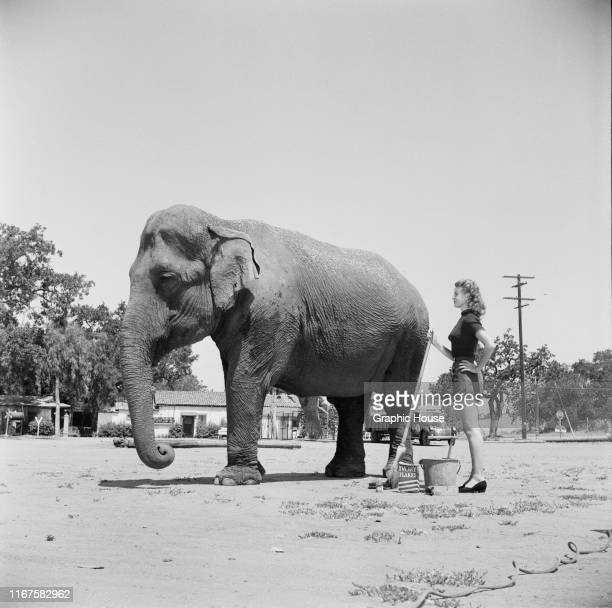 American actress Joan Vohs washes an elephant with a box of Ivory Flakes circa 1955