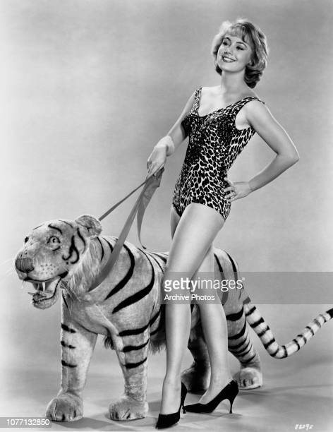 American actress Shirley Jones walking a large toy tiger whilst wearing a leopard print swimsuit circa 1960