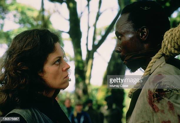 American actress Sigourney Weaver as naturalist Dian Fossey, staging the mock execution of a poacher in a scene from the film 'Gorillas in the Mist',...
