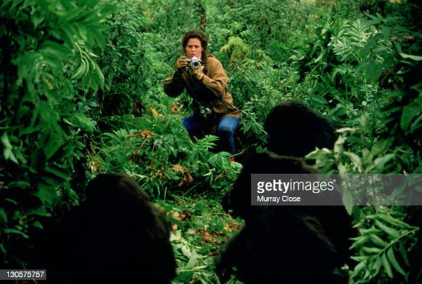 American actress Sigourney Weaver as naturalist Dian Fossey, studying the Mountain Gorilla in Rwanda in the film 'Gorillas in the Mist', 1988.