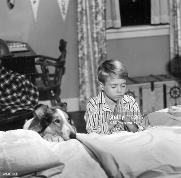 American animal actor Spook as Lassie sits next to child actor Jon Provost as Timmy who prays in an episode of the television show 'Lassie' entitled...