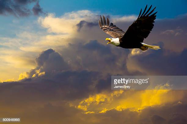 american bald eagle flying in spectacular dramatic sky - flying stock photos and pictures