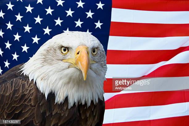 american bald eagle with flag - bald eagle with american flag stock pictures, royalty-free photos & images