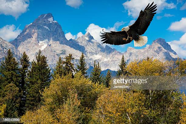 American Bald Eagle With Majestic Grand Tetons Mountains