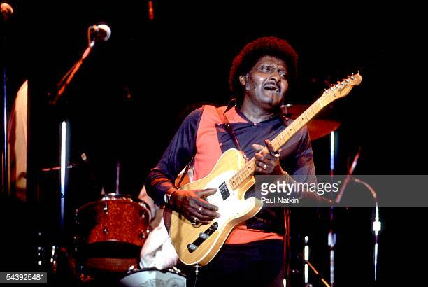 American blues musician Albert Collins performs at the Park West auditorium Chicago Illinois February 10 1986