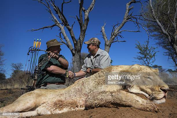 American Bow hunter Steve Sibrel hunts a lioness with professional South African hunter guides on a game farm close to the South Africa/Botswana...
