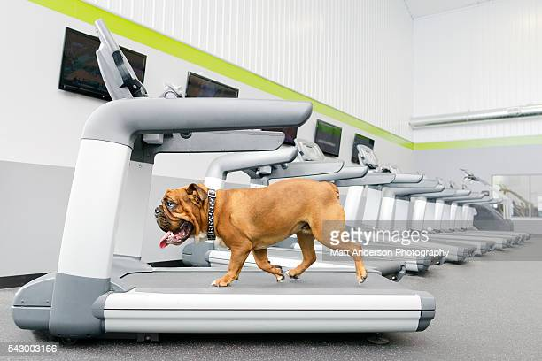 dog treadmill stock photos and pictures getty images