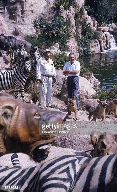 American businessman animator and director Walt Disney inspects an animal exhibit with an unidentified man at the Disneyland theme park Anaheim...