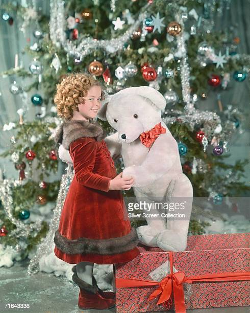 American child star Shirley Temple holding a large teddy bear in front of a Christmas tree circa 1935