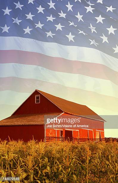 American flag and red barn in a corn field