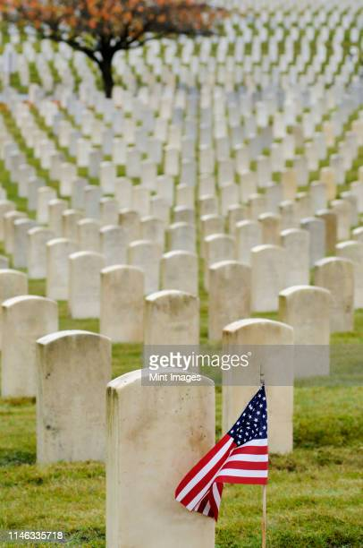 american flag planted in veteran cemetery - memorial day remembrance stock pictures, royalty-free photos & images
