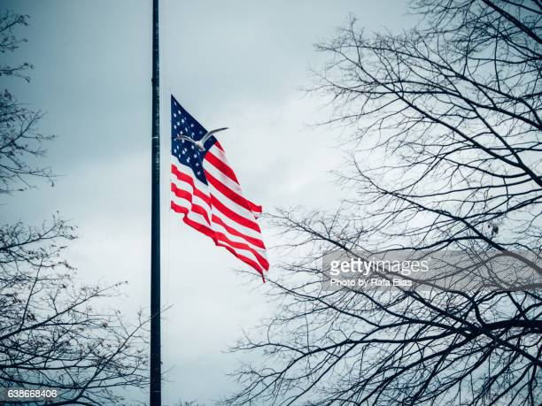 american flag with flying gull - half mast stock photos and pictures