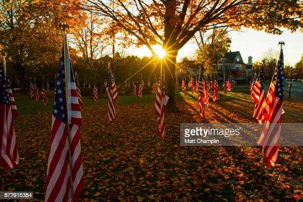 american flags in public park for veterans day - skaneateles lake stock pictures, royalty-free photos & images