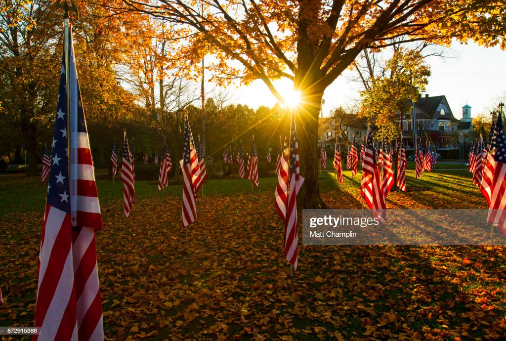 American Flags in Public Park for Veterans Day : Stock Photo