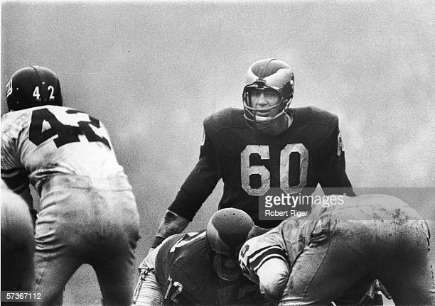 American football player Chuck Bednarik of the Philadelphia Eagles eyes his opponants as Charlie Conerly quarterback for the New York Giants prepares...