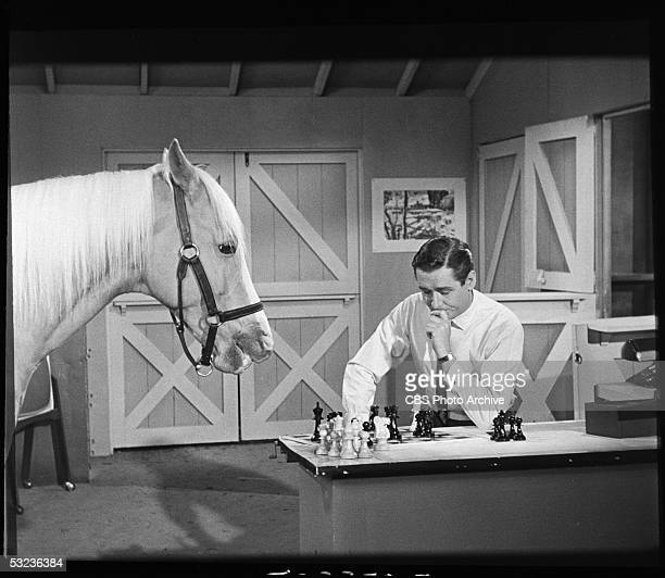 American horse and comic actor Bamboo Harvester who plays the title character on the television show 'Mr Ed' comtemplates his next move in a chess...