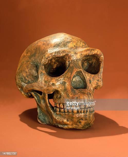 Peking Man's reconstructed skull, Cave Choukou'tien
