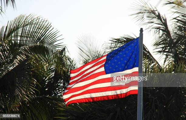 American National flag waving against palm trees in Florida, USA