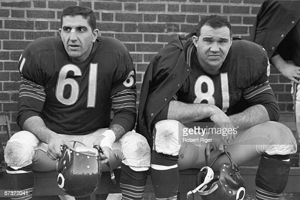 American professional football players and Chicago Bears teammates defensive line Doug Atkins and linebacker Bill George sit on the bench and hold...