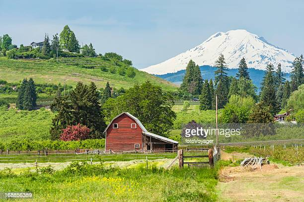 american red barn in green farmland below mt adams usa - hood river stock pictures, royalty-free photos & images