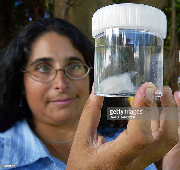 American researcher LisaAnn Gershwin displays a deadly new species of irukandji jellyfish caught off the coast of Broome and considered to be one of...