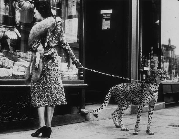 Cheetah Who Shops