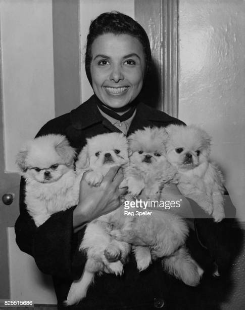 American singer and actress Lena Horne with an armful of Pekingese puppies at the Eloc Kennels in Streatham, London, 10th November 1955. She...