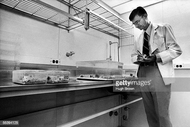 American sociobiologist E. O. Wilson takes notes while studying ants in the insectary at Harvard University, Cambridge, Massachusetts, September 8,...