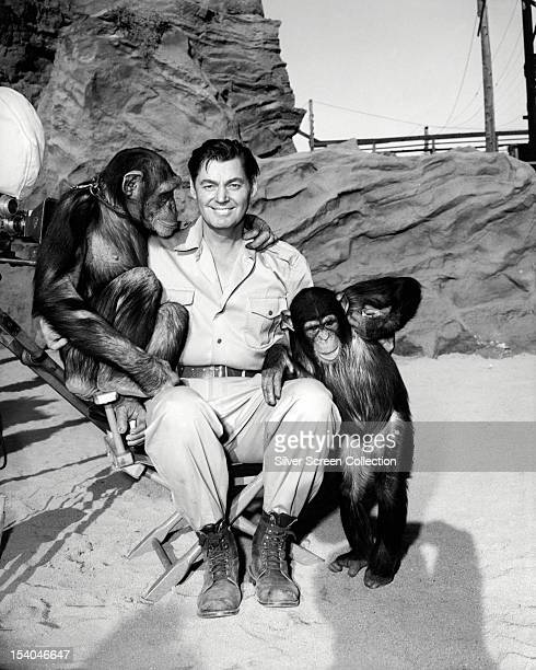 American swimmer and actor Johnny Weissmuller with a pair of chimpanzees on the set of William Berke's adventure film 'Jungle Jim' in which he plays...