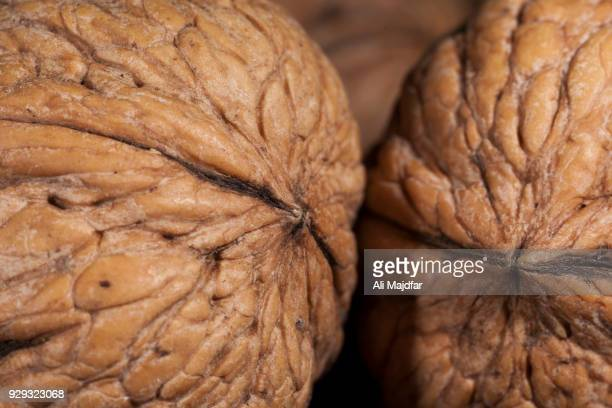 american walnuts - nutshell stock photos and pictures