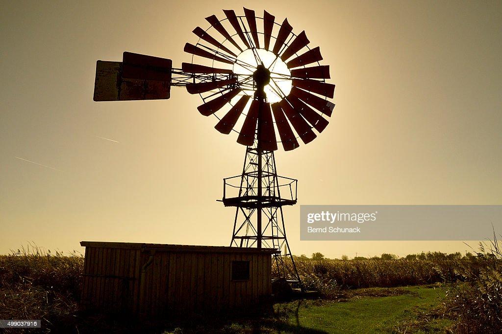 American-style windmill in backlight : Stock-Foto