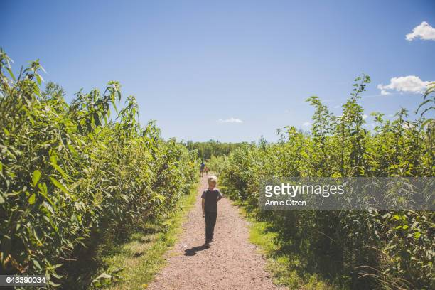 america's heartland - little boy walking down dirt path - milkweed stock pictures, royalty-free photos & images