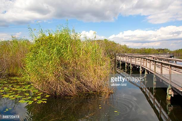 Amerika, USA, Florida, Sunshine State,Atlantic Ocean , Caribbean Sea, Everglades National Park, Everglades, Okeechobee, national park, UNESCO,...