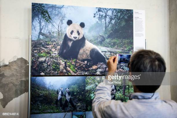 Ami Vitale 'Pandas Gone Wild' photo on the opening of World Press Photo 2017 exhibition in the former Powerhouse of Royal Iron Works in Chorzow...