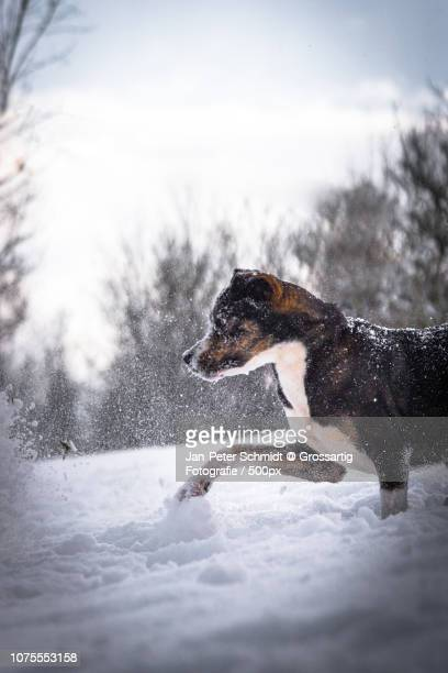 amica snow - peter snow stock pictures, royalty-free photos & images