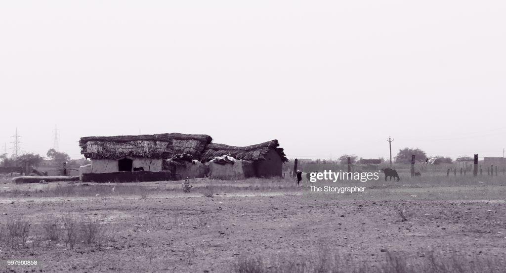 Amidst the desert : Stock Photo