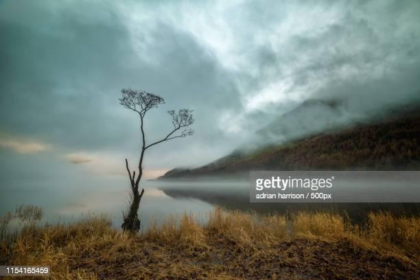Amidst The Fog
