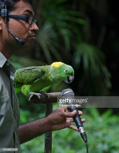 Amigo, Yellow-naped Amazon Parrot, star of the Birds-N-Buddies Show at Jurong Bird Park, Singapore, he can sing in three different languages.
